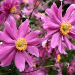 Pflanzenverwendung – Hilfe bei der Sortenwahl…
